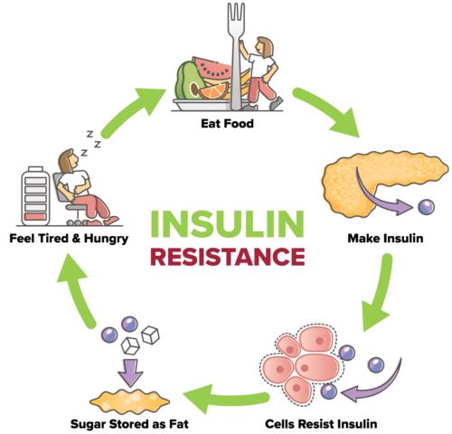 Cause_7_Insulin-Cycle2